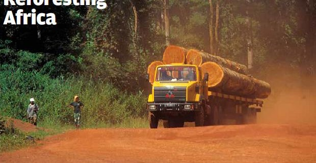 Reforesting_Africa